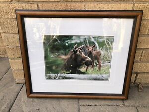 THOMAS MANGELSEN Moose Mother and Baby Framed Signed Limited Edition Photograph