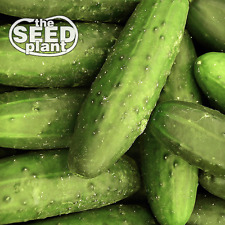 Ashley Long Cucumber Seeds - 25 SEEDS - SAME DAY SHIPPING