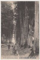 Crytomeria Road Hakone, Japan Postcard, B729