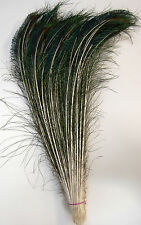 "50 Pcs PEACOCK SWORDS Natural Feathers 15""-20"" Craft/Pad/Decor/Costume/Hats/Art"
