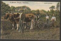Postcard Guernsey Channel Islands a Bullock Plough rural farm farming by Guerin