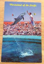 Marineland of the Pacific CA vintage glossy postcard -porpoise dolphin & trainer