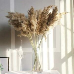 10x Natural Dried Pampas Grass Reed Flower Bunch Wedding Bouquet Home Decor