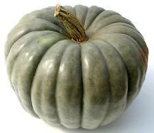 Pumpkin JARRAHDALE-Pumpkin Seeds-VERY TASTY SHOW WINNER-20 CHUNKY  SEEDS