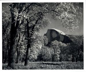 1949 Original ANSEL ADAMS Yosemite Half Dome Mountain Landscape Photo Art 12X16