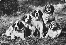 Saint Bernard Dogs, Dina, Aline, Kairo Harry Flora, Elevage du Plateau du Raincy