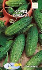 graines de mini - concombre  Polan F1 - 20 graines
