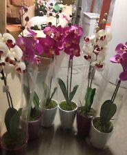 Künstliche Orchidee pink,lila,weiß Kunstblume Dekotopf Fensterschmuck Dekoration