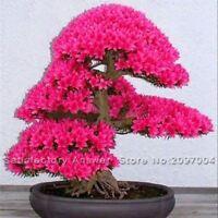 10PCS Japanese Sakura Bonsai Tree Seed Flower Garden Seeds Cherry Blossoms