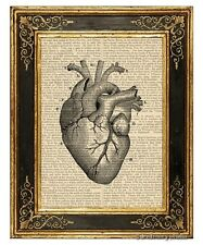 Heart #1 Art Print on Vintage Book Page Medical Anatomy Illustration Home Decor