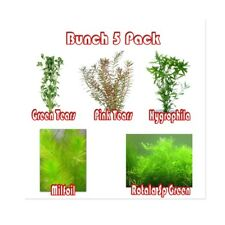 Live Aquarium Aquatic Plant Fish Tank Bunch 5 Pack