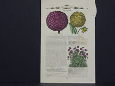 James Vick Seed Catalog Rocheter, N.Y. Flowers/ Vegetables, Hand Colored s#17