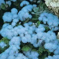 Fiore-Kings Seeds-pacchetto pittorico-Ageratum-Blu Palla