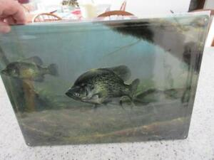 Crappie Elusive Fish Embossed Sign 17 x 12 NEW Abraham Hunter - Man Cave