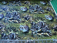 3 Yards Quilt Cotton Fabric - Springs Wild Wings Masked Bandits Raccoon Scenic