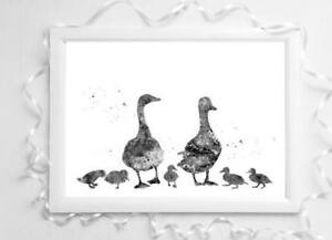 duck family animal  black & white picture a4 glossy Print poster gift UNFRAMED