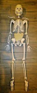 Collana il corpo umano ed 2020 RBA scheletro completo cm 110/120