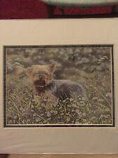 Yorkshire Terrier MONTADO ARTE IMPRESIÓN 10 X 8