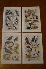 4 x prints biology birds crows ducks finches ornithology