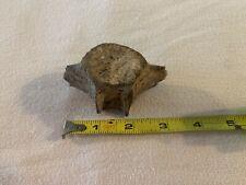 Fossil Whale Vertebra, Miocene, 5.3-23 Myo, Venice Beach, Fl