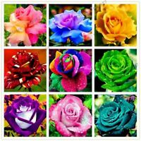200 pcs Rare Holland Rainbow Rose Seeds Flower bonsai Home Garden Rare Flower pl