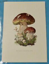 Planche poster Affiche art print Botanique Champignon Bolet cèpe de bordeaux