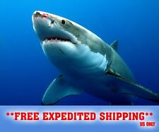 "GREAT WHITE SHARK  POSTER 24"" x 36"" JAWS LARGE WALL POSTER PRINT BLOODY NOSE"