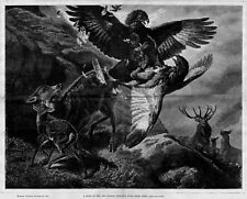 EAGLES FIGHTING IN AIR OVER THEIR PREY, ANTIQUE EAGLE