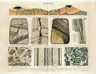 1895 EARTH'S CRUST LAND STRUCTURE GEOLOGY Antique Chromolithograph Print
