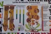 Objet de Métier Set de table Apiculture Ruche la vie de l'Abeille Domestique