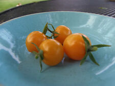 Ambrosia Gold - Wild, sweet flavor, another wonderful variety from J&L Gardens