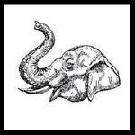 Washington.Elephant