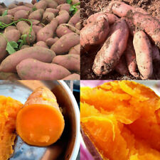 20× Sweet Potato Seeds Bonsai Garden Delicious Fruit Vegetable Batata Plant