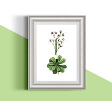 Botanical pink flower 3 illustration 13x18 cm 5x7' premium quality glossy print