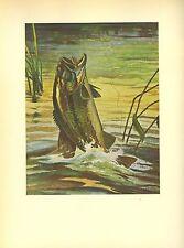1937 Vintage Schaldach Fish Color Art Print Large-mouth Bass Shaking