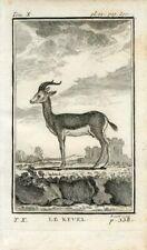 1769 ANTELOPE KEVEL Antique Copper Plate Engraving Print BUFFON