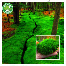 Green Moss Seeds Rare Exotic Viable Bonsai Plant Potted Decorative Garden 100Pcs
