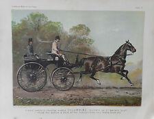 1876 Antique Horse Print COLUMBINE - Single Harness Phaeton 1st Prize 1872 Show