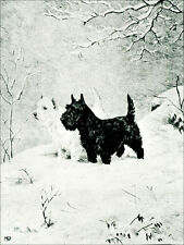 Scottish & West Highland Terrier 1920's M. Kirmse LARGE New Blank Note Cards