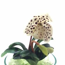 Miniature Dollhouse Tiny Flower Orchid Species Plant Paphiopedium Collection 3