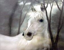 METAL REFRIGERATOR MAGNET White Horse In Mist Western Cowboy