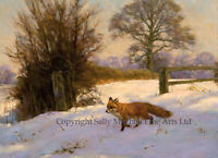 Fox in the Snow Christmas cards pack of 10 by Fred Haycock C267X