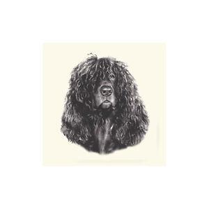 Dog Show Ring Number Clip Pin Breed - Irish Water Spaniel