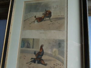 Antique Cock Fighting Engravings, Hand Tinted after Alken 1840 Pair