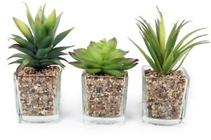 Artificial Plant Pots Glass Jars Stones Home Decoration Cactus Gift - SET OF 3
