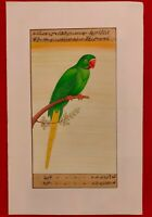 Hand Painted Parrot Bird Birds Miniature Painting India Artwork Paper Nature