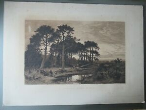 Large Antique Etching Surrey Pine Wood T Chauvel After B W Leader Canvas Framed
