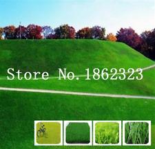 Japanese Forest Grass 1000 Pcs Seeds Lawn Perennial Evergreen Bonsai Garden New