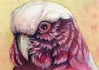 ACEO ORIGINAL Rosalbine cockatoo 617 Mixed Media Painting bird parrot s-lana