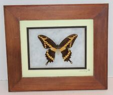 Brown & Yellow Real Giant Swallowtail Butterfly In Wood Frame Display Ships FREE